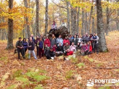 El Castañar de El Tiemblo, grupo senderista de Madrid; rutas por el alto tajo